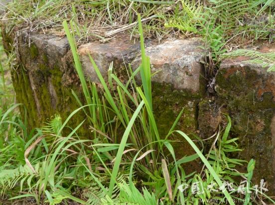 【寻龙点穴】之墓主坟穴无人打扫而长了青苔